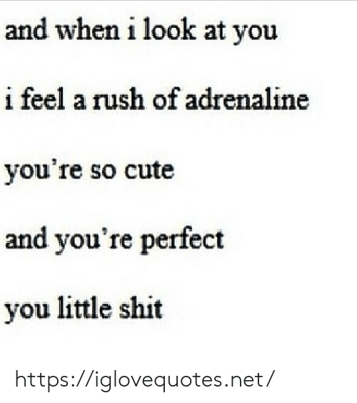 adrenaline: and when i look at you  i feel a rush of adrenaline  you're so cute  and you're perfect  you little shit https://iglovequotes.net/