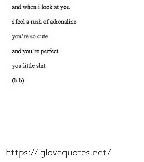 B. B.: and when i look at you  i feel a rush of adrenaline  you're so cute  and you're perfect  you little shit  (b.b) https://iglovequotes.net/