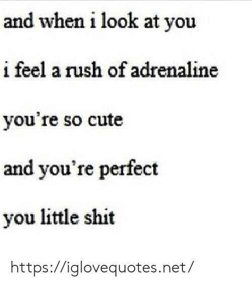 Little Shit: and when i look at you  i feel a rush of adrenaline  you're so cute  and you're perfect  you little shit https://iglovequotes.net/