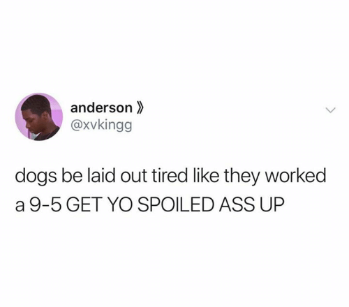 Ass, Dogs, and Yo: anderson  @xvkingg  dogs be laid out tired like they worked  a 9-5 GET YO SPOILED ASS UP