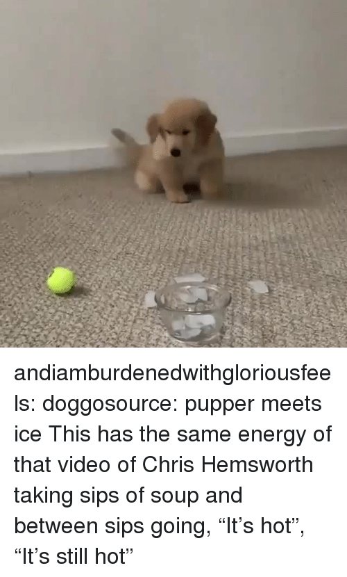 "sips: andiamburdenedwithgloriousfeels:  doggosource: pupper meets ice This has the same energy of that video of Chris Hemsworth taking sips of soup and between sips going, ""It's hot"", ""It's still hot"""