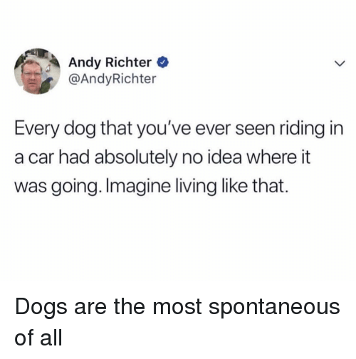 Dogs, Girl Memes, and Living: Andy Richter e  @AndyRichter  Every dog that you've ever seen riding in  a car had absolutely no idea where it  was going. Imagine living like that. Dogs are the most spontaneous of all