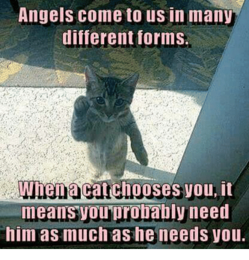 Memes, Angels, and 🤖: Angels come to us in many  differentforms.  When acatchooses you, it  means youprobably need  him as much as he needs you.