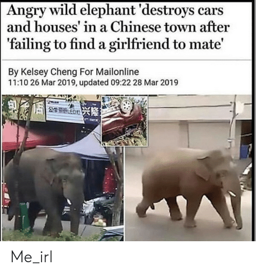 houses: Angry wild elephant 'destroys cars  and houses' in a Chinese town after  'failing to find a girlfriend to mate'  By Kelsey Cheng For Mailonline  11:10 26 Mar 2019, updated 09:22 28 Mar 2019  249 ED Me_irl