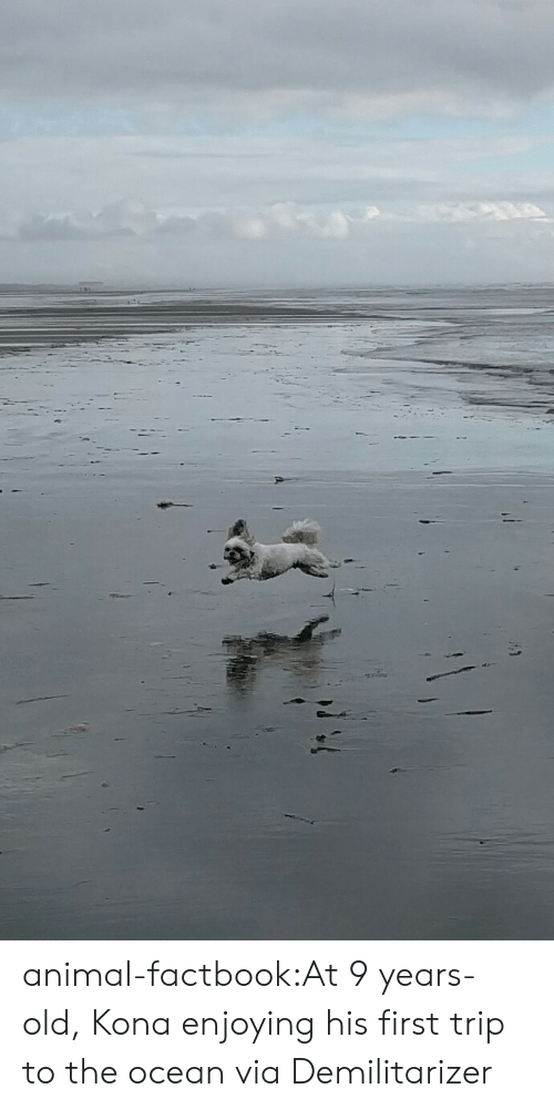 Tumblr, Animal, and Blog: animal-factbook:At 9 years-old, Kona enjoying his first trip to the ocean via Demilitarizer