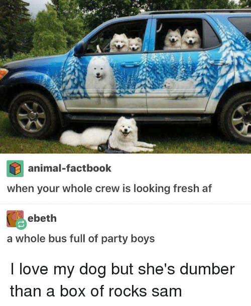 boys i love: animal-factbook  When your whole crew is looking fresh at  ebeth  a Whole bus tull of party boys I love my dog but she's dumber than a box of rocks ≪sam≫