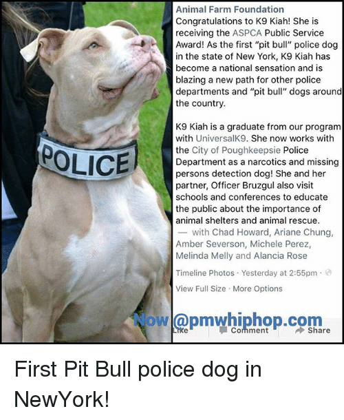 """Aspca: Animal Farm Foundation  Congratulations to K9 Kiah! She is  receiving the ASPCA Public Service  Award! As the first """"pit bull"""" police dog  in the state of New York, K9 Kiah has  become a national sensation and is  blazing a new path for other police  departments and """"pit bull"""" dogs around  the country.  K9 Kiah is a graduate from our program  with UniversalK9. She now works with  the City of Poughkeepsie Police  Department as a narcotics and missing  persons detection dog! She and her  partner, Officer Bruzgul also visit  schools and conferences to educate  the public about the importance of  animal shelters and animal rescue.  -with Chad Howard, Ariane Chung,  Amber Severson, Michele Perez,  Melinda Melly and Alancia Rose  POLICE  Timeline Photos Yesterday at 2:55pm.e  View Full Size More Options  owl@pmwhiphop.com  Comment First Pit Bull police dog in NewYork!"""