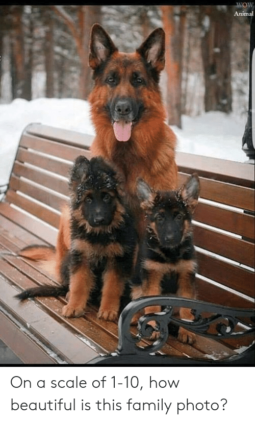 family photo: Animal On a scale of 1-10, how beautiful is this family photo?