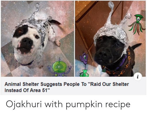 """Animal Shelter: Animal Shelter Suggests People To """"Raid Our Shelter  Instead Of Area 51"""" Ojakhuri with pumpkinrecipe"""