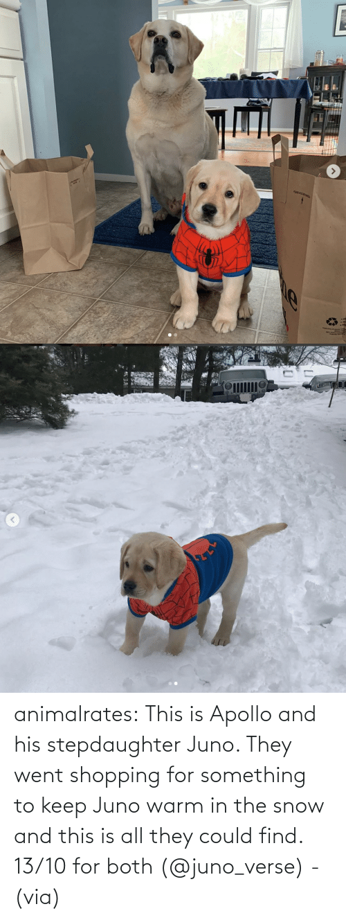 warm: animalrates:  This is Apollo and his stepdaughter Juno. They went shopping for something to keep Juno warm in the snow and this is all they could find. 13/10 for both‬ (@juno_verse) - (via)