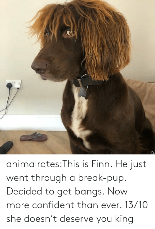 she: animalrates:This is Finn. He just went through a break-pup. Decided to get bangs. Now more confident than ever. 13/10 she doesn't deserve you king
