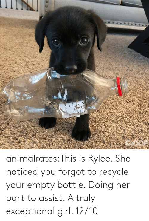 she: animalrates:This is Rylee. She noticed you forgot to recycle your empty bottle. Doing her part to assist. A truly exceptional girl. 12/10