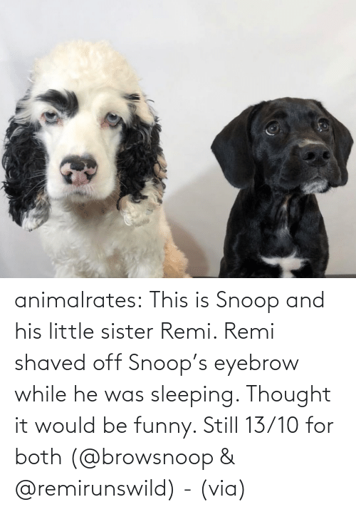 Sleeping: animalrates:  This is Snoop and his little sister Remi. Remi shaved off Snoop's eyebrow while he was sleeping. Thought it would be funny. Still 13/10 for both‬ (@browsnoop & @remirunswild) - (via)
