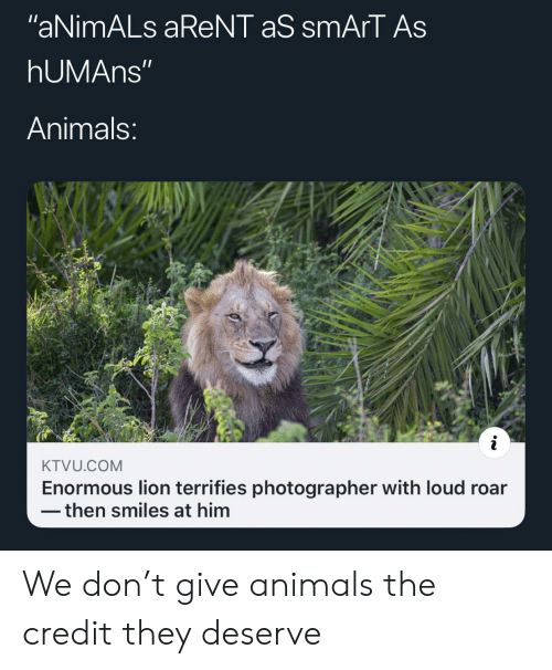 "Smiles: ""aNimALs aReNT aS smArT As  hUMAns""  Animals:  KTVU.COM  Enormous lion terrifies photographer with loud roar  then smiles at him We don't give animals the credit they deserve"