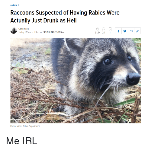 Animals, Drunk, and Police: ANIMALS  Raccoons Suspected of Having Rabies Were  Actually Just Drunk as Hell  Catie Keck  Today 1:15am . Filed to: DRUNK RACCOONS﹀  31.5K 24 1f  Photo: Mlton Police Department Me IRL