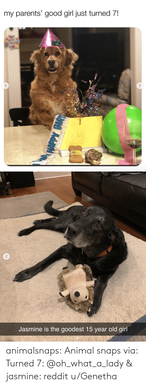 Target: animalsnaps: Animal snaps via: Turned 7: @oh_what_a_lady & jasmine: reddit u/Genetha