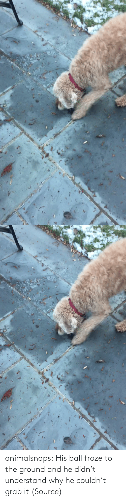 grab: animalsnaps:  His ball froze to the ground and he didn't understand why he couldn't grab it (Source)