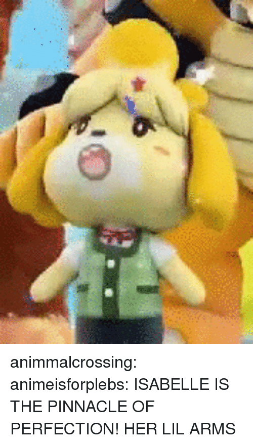 Pinnacle: animmalcrossing: animeisforplebs:  ISABELLE IS THE PINNACLE OF PERFECTION!  HER LIL ARMS