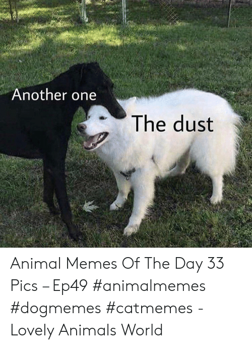Animals, Another One, and Memes: Another one  The dust Animal Memes Of The Day 33 Pics – Ep49 #animalmemes #dogmemes #catmemes - Lovely Animals World