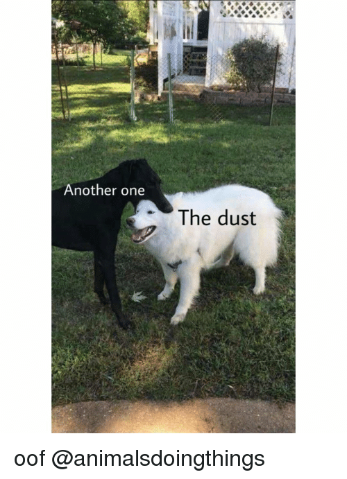 Another One, Dank Memes, and Another: Another one  The dust oof @animalsdoingthings