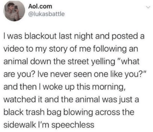"seen: Aol.com  @lukasbattle  I was blackout last night and posted a  video to my story of me following an  animal down the street yelling ""what  are you? Ive never seen one like you?""  and then I woke up this morning,  watched it and the animal was just a  black trash bag blowing across the  sidewalk I'm speechless"
