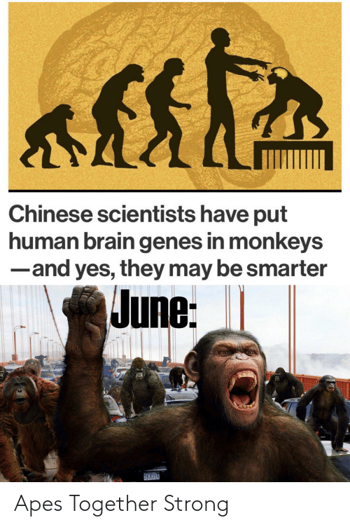 Strong: Apes Together Strong