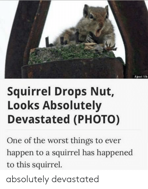 devastated: Apet Vk  Squirrel Drops Nut,  Looks Absolutely  Devastated (PHOTO)  One of the worst things to ever  happen to a squirrel has happened  to this squirrel. absolutely devastated