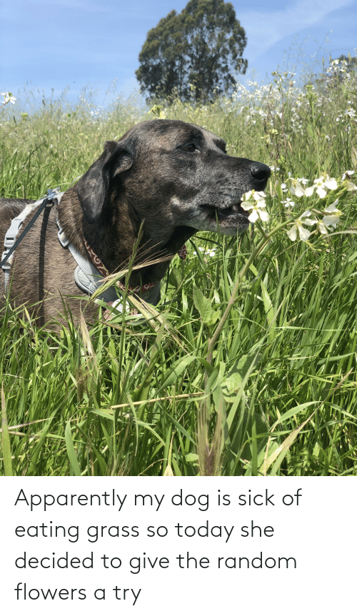Flowers: Apparently my dog is sick of eating grass so today she decided to give the random flowers a try