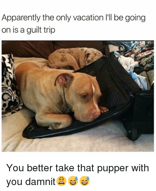 Apparently, Funny, and Vacation: Apparently the only vacation 'll be going  on is a guilt trip You better take that pupper with you damnit😩😅😅
