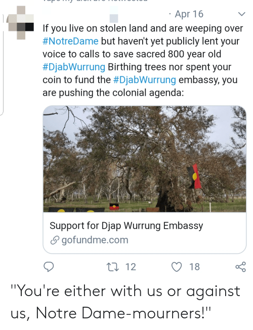 """Tumblr, Live, and Notre Dame: Apr 16  If you live on stolen land and are weeping over  #NotreDame but haven't yet publicly lent your  voice to calls to save sacred 800 year old  #Diabwurrung Birthing trees nor spent your  coin to fund the #Diabwurrung embassy, you  are pushing the colonial agenda  Support for Djap Wurrung Embassy  S gofundme.com  O 18  12 """"You're either with us or against us, Notre Dame-mourners!"""""""