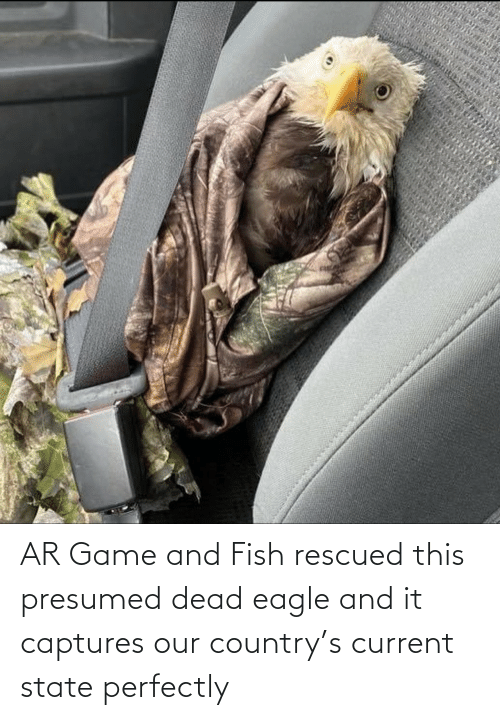 Current: AR Game and Fish rescued this presumed dead eagle and it captures our country's current state perfectly