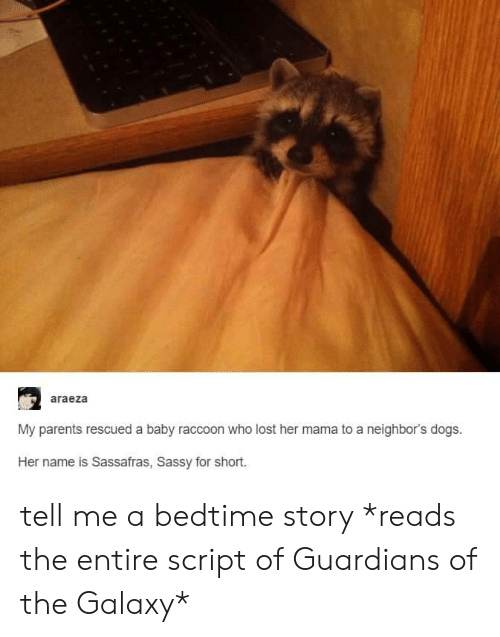 Dogs, Parents, and Lost: araeza  My parents rescued a baby raccoon who lost her mama to a neighbor's dogs.  Her name is Sassafras, Sassy for short. tell me a bedtime story *reads the entire script of Guardians of the Galaxy*