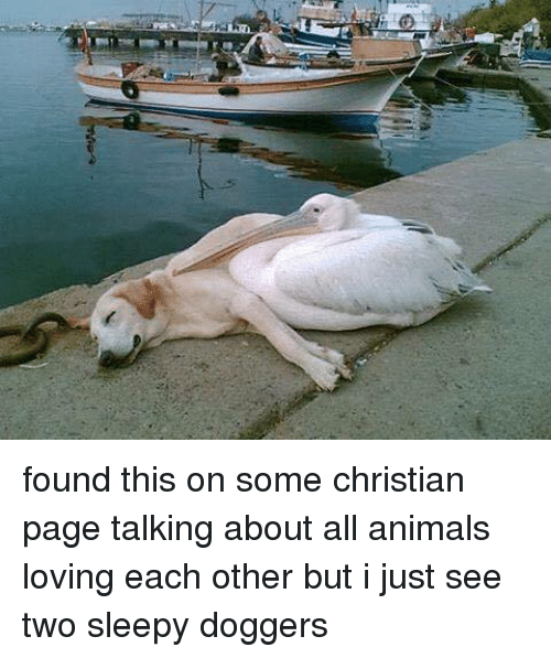 Animals, Anime, and Love: arai found this on some christian page talking about all animals loving  each other but i just see two sleepy doggers