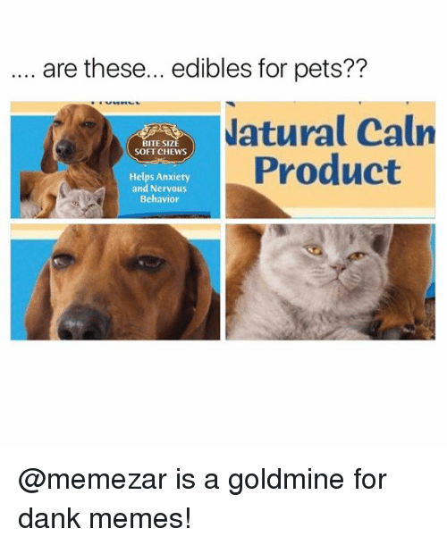 Danks: are these... edibles for pets??  atural Caln  Product  BITE SIZE  SOFT CHEWS  Helps Anxiety  and Nervous  Behavior @memezar is a goldmine for dank memes!
