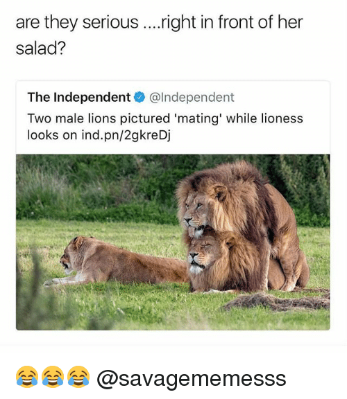 Memes, Lions, and 🤖: are they serious ....right in front of her  salad?  The Independent@lndependent  Two male lions pictured 'mating' while lioness  looks on ind.pn/2gkreDj 😂😂😂 @savagememesss