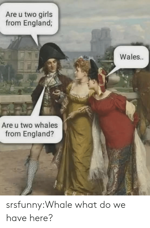 England, Girls, and Tumblr: Are u two girls  from England;  Wales..  Are u two whales  from England? srsfunny:Whale what do we have here?