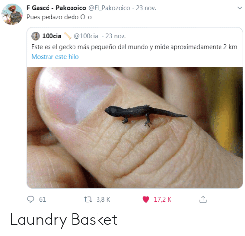 I Dont Even Know: Are you a  laundry basket?  Are you a  laundry basket?  No, I'm  a chair  Are you a  laundry basket?  Man, I don't even  know anymore  I'm the  floor.  LOLNEIN.com Laundry Basket