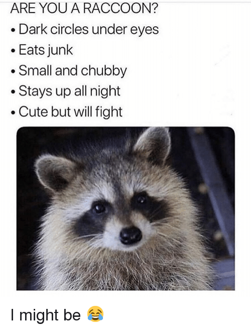 Cute, Memes, and Raccoon: ARE YOU A RACCOON?  . Dark circles under eyes  .Eats junk  . Small and chubby  . Stays up all night  Cute but will fight I might be 😂