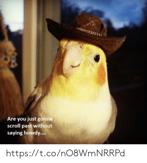 Scroll: Are you just gonna  scroll past without  saying howdy.... https://t.co/nO8WmNRRPd