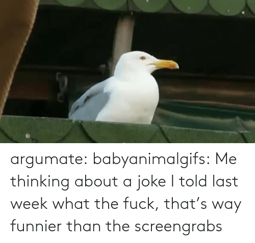 I Told: argumate: babyanimalgifs: Me thinking about a joke I told last week what the fuck, that's way funnier than the screengrabs