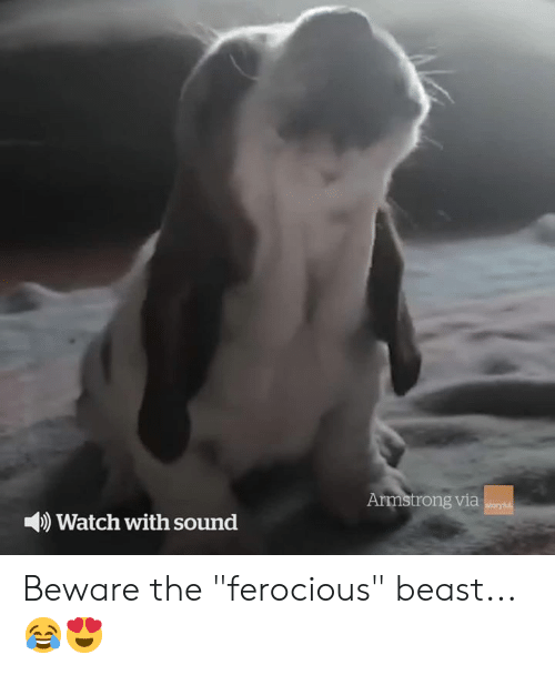 """Watch, Ferocious, and Beast: Armstrong via  storyful  Watch with sound Beware the """"ferocious"""" beast... 😂😍"""