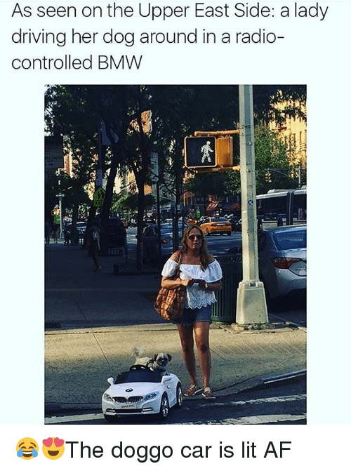 Af, Bmw, and Driving: As seen on the Upper East Side: a lady  driving her dog around in a radio-  controlled BMW 😂😍The doggo car is lit AF