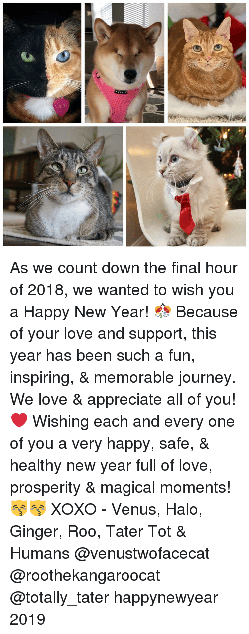 tot: As we count down the final hour of 2018, we wanted to wish you a Happy New Year! 🎊 Because of your love and support, this year has been such a fun, inspiring, & memorable journey. We love & appreciate all of you! ❤️ Wishing each and every one of you a very happy, safe, & healthy new year full of love, prosperity & magical moments! 😽😽 XOXO - Venus, Halo, Ginger, Roo, Tater Tot & Humans @venustwofacecat @roothekangaroocat @totally_tater happynewyear 2019