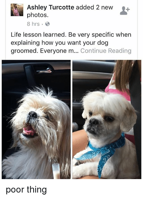 Groomed: Ashley Turcotte added 2 new+  photos.  8 hrs.  Life lesson learned. Be very specific when  explaining how you want your dog  groomed. Everyone m... Continue Reading poor thing