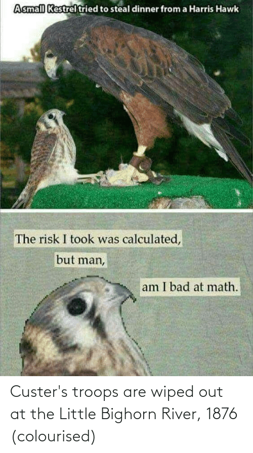 But Man Am I Bad At Math: Asmall Kestrel tried to steal dinner from a Harris Hawk  The risk I took was calculated,  but man,  am I bad at math. Custer's troops are wiped out at the Little Bighorn River, 1876 (colourised)
