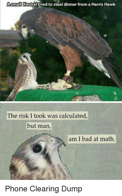 Bad At Math: Asmall Kestrel'tried to steal dinner from a Harris Hawk  The risk I took was calculated  but man,  am I bad at math Phone Clearing Dump