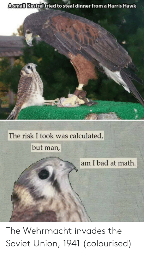 Bad At Math: Asmall Kestreltried to steal dinner from a Harris Hawk  The risk I took was calculated,  but man,  am I bad at math. The Wehrmacht invades the Soviet Union, 1941 (colourised)