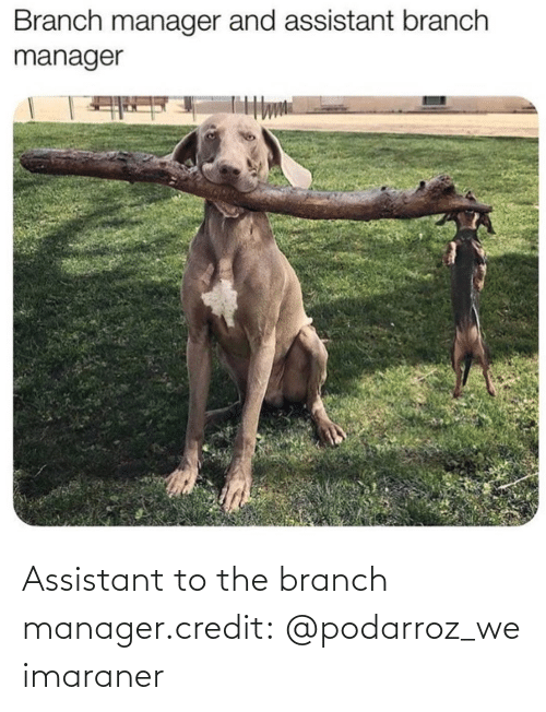 Assistant: Assistant to the branch manager.credit: @podarroz_weimaraner
