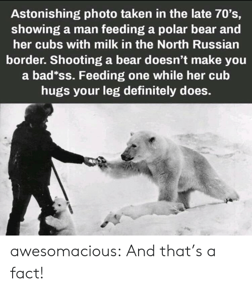 Bad, Definitely, and Taken: Astonishing photo taken in the late 70's,  showing a man feeding a polar bear and  her cubs with milk in the North Russian  border. Shooting a bear doesn't make you  a bad*ss. Feeding one while her cub  hugs your leg definitely does. awesomacious:  And that's a fact!