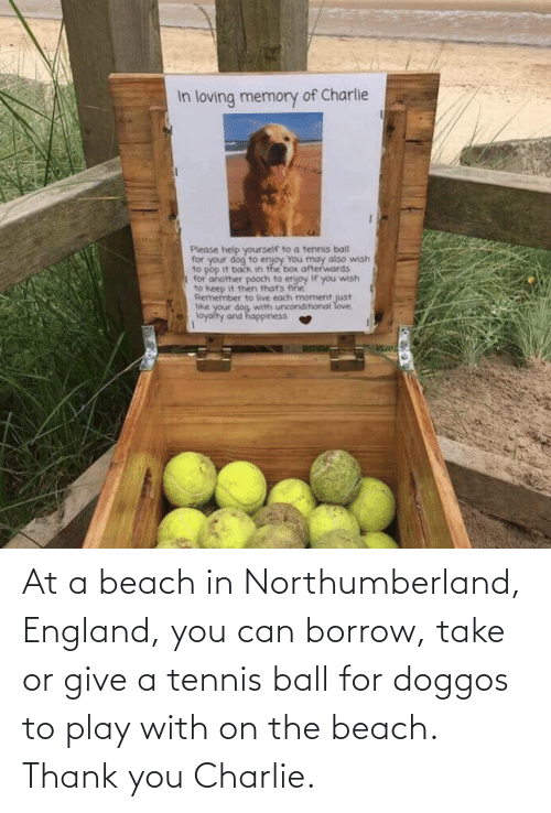 play: At a beach in Northumberland, England, you can borrow, take or give a tennis ball for doggos to play with on the beach. Thank you Charlie.
